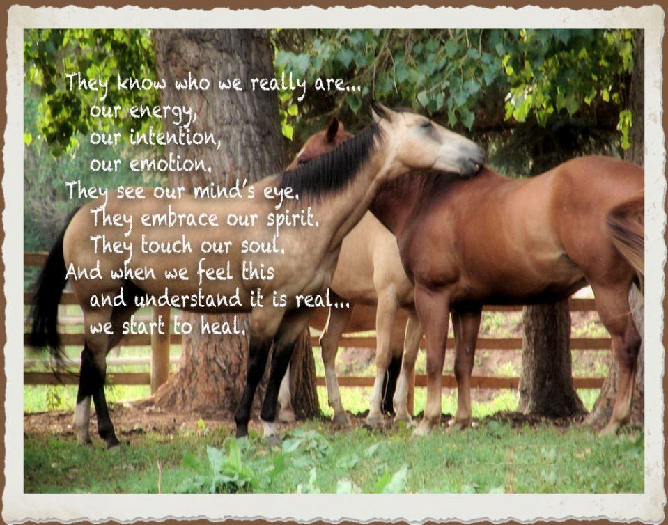 mckenna's_horses_chalkduster_frame